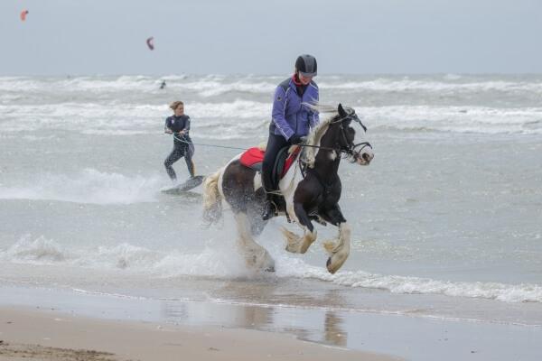 Horseboarden